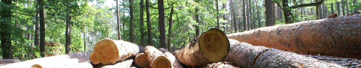 Zimmerei-Holzbau GmbH